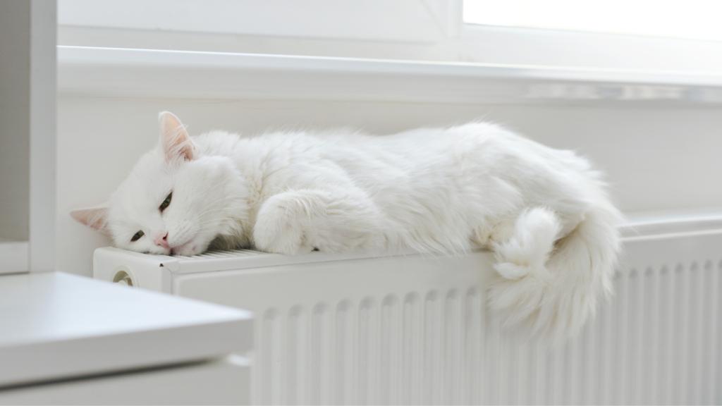 radiateur chat